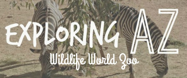 http://awayshewentblog.blogspot.com/2015/01/exploring-az-wildlife-world-zoo.html
