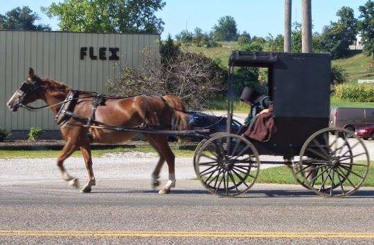 Swartzentruber Amish buggy