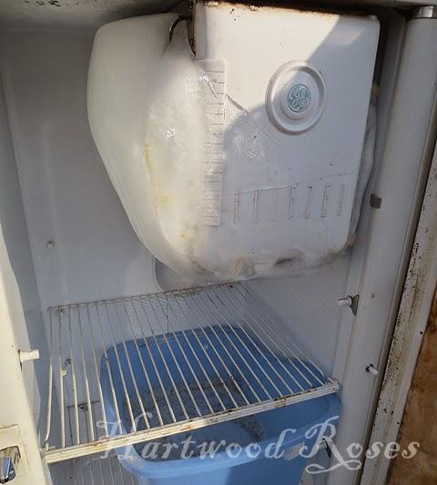 Hartwood Roses Restoring Our Vintage Ge Refrigerator