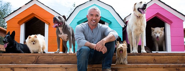 Cesar Millan and Best Western want to know where your doggies enjoy relaxing and vacationing. Share with them and you could win a $1,000 Best Western Hotels & Resorts Travel Card!