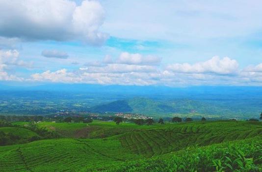 Kebun Teh Gunung Dempo Wisata Palembang
