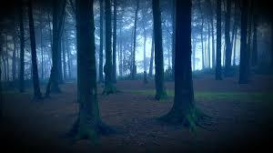 Hutan horor, Hutan misterius, Hutan menyeramkan, Hutan setan