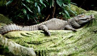 Zoo in Kuala Lampur