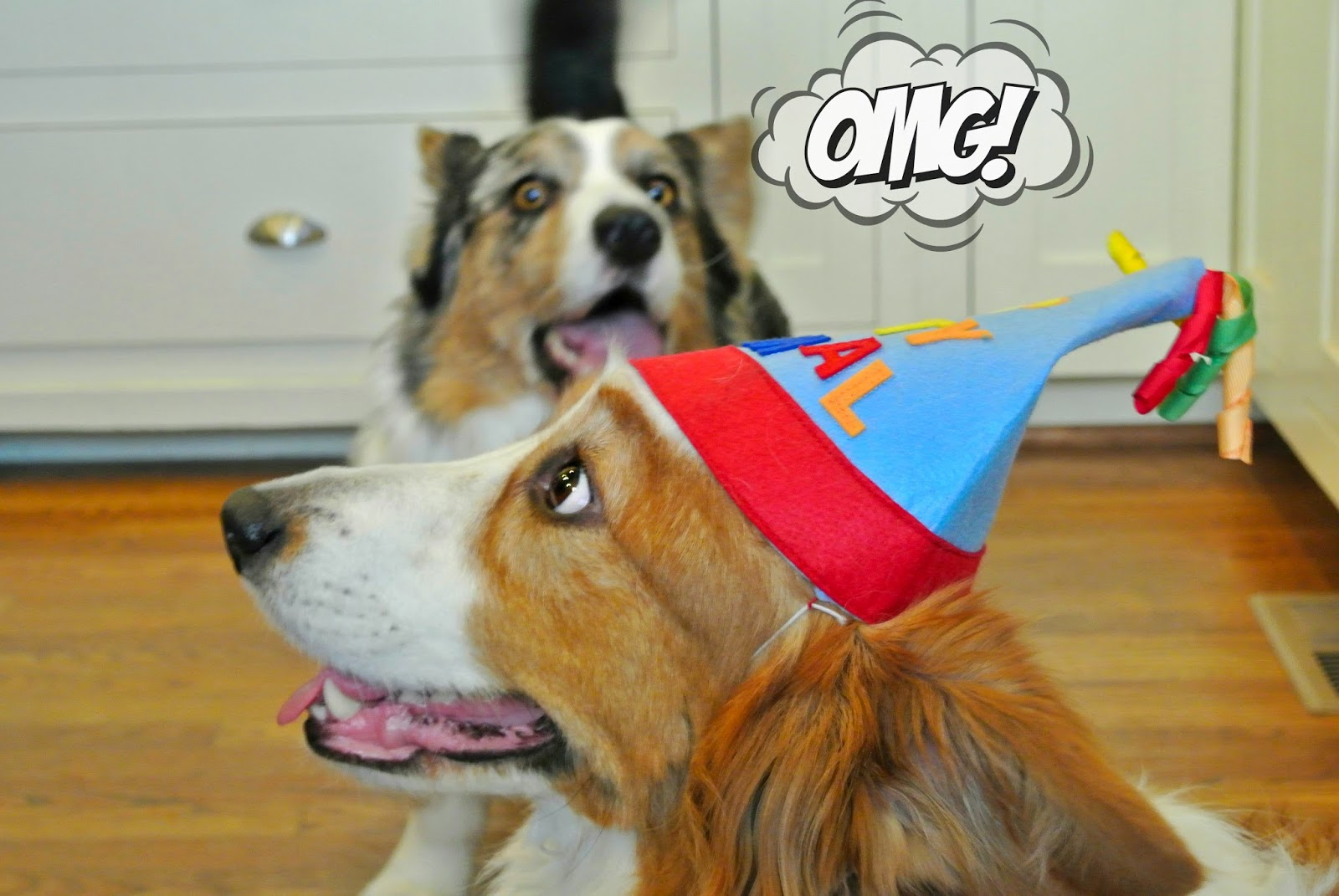 Image Result For Left Overs Dogs