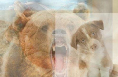 Qeni dhe ariu