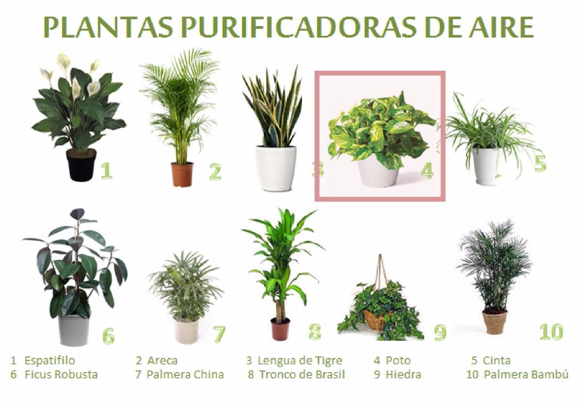 Zona confort plantas para combatir el calorzona confort - Plantas de interior que purifican el aire ...