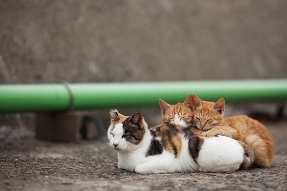 5 Surga Wisata Bagi Penggemar Kucing Karawangtoday