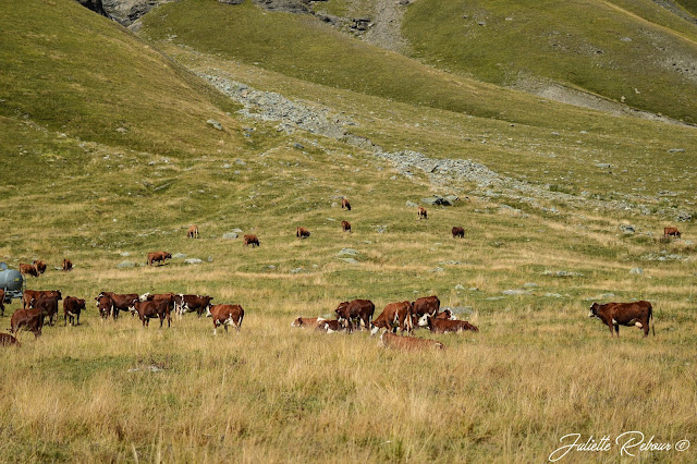 Alpage de la Grande Sassière, Savoie