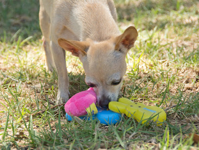 Licensed Peeps dog toys