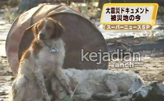 japan tsunami watch dog 13 Kisah Kesetiaan Anjing yang Dijamin Bikin Nangis