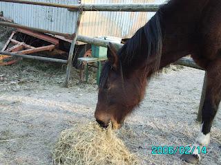 frau von pferd gedeckt