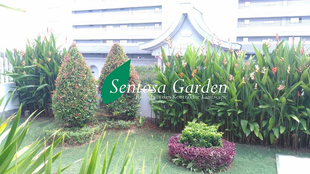 Galeri Foto Taman Minimalis Jakarta