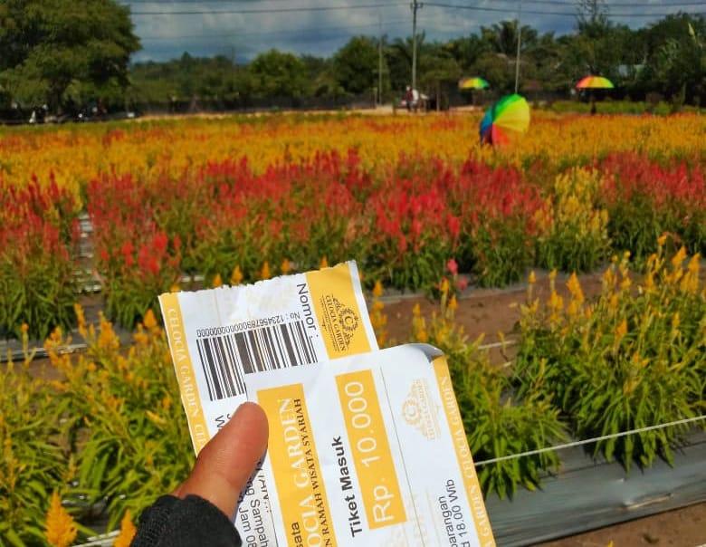 Taman Bunga Celocia Destinasi Wisata Baru Di Aceh Jaya