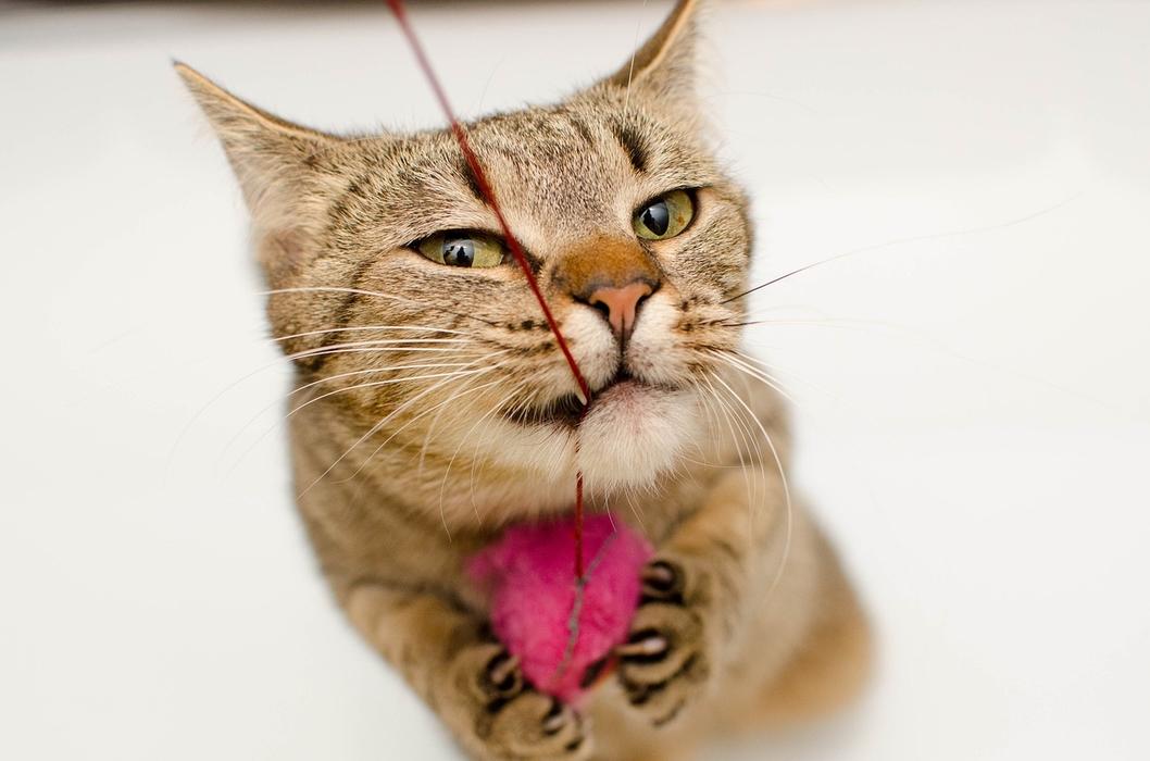 Kot zjadł sznurek, kot połknął nitkę