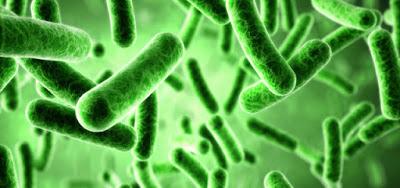 Probiotik