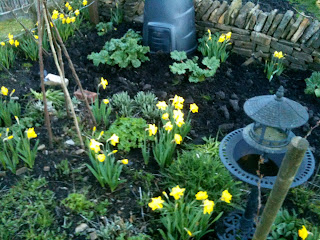growing, gardening, flowers for all seasons, life on pig row