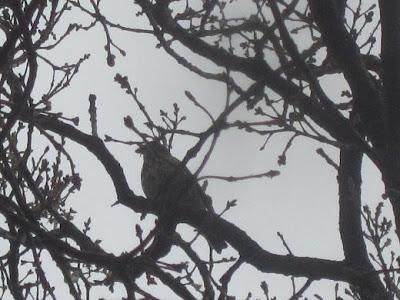 Μαύρο μουνί μαύρο πουλί