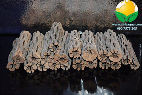 Phụ kiện thủy sinh - lũa cholla cho hồ thủy sinh nuôi tép