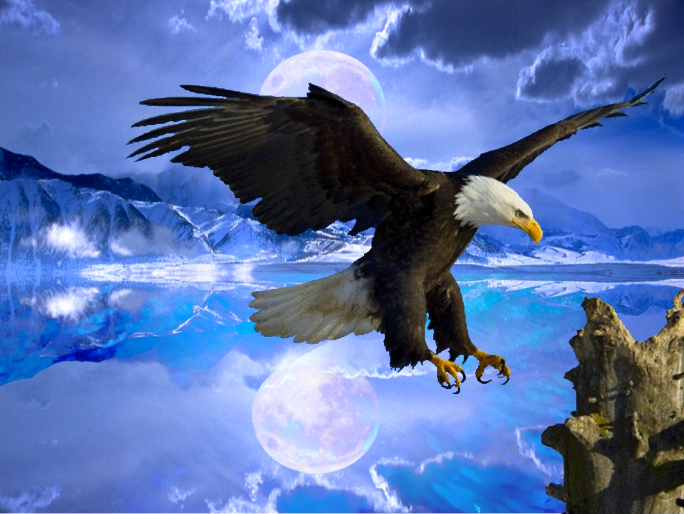 Www 3d Name Wallpaper Fabulous And Amazing Eagle Wallpapers In Hd For More