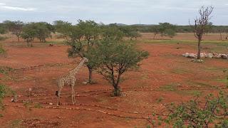 Okutala Namibia