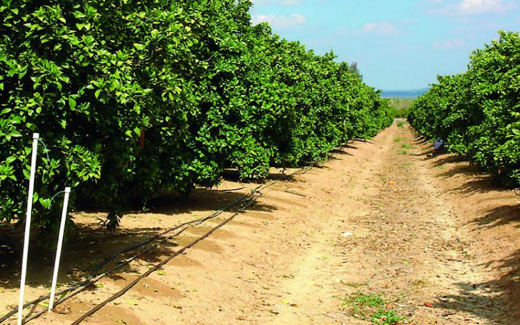 Estructura Agraria