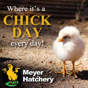 photo FED_BANNER_CHICKDAYEVERYDAY_zps9e87d851.jpg