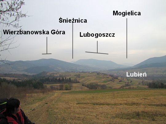 Fragment panoramy ze skraju lasu.