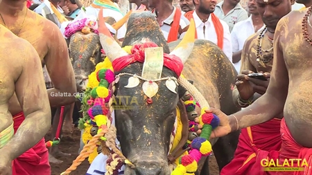 Alankanallur Jallikattu | Video