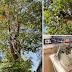 Εθελοντές έσωσαν γάτο που είχε παγιδευτεί για 3 μερόνυχτα σε δέντρο ύψους 10 μέτρων