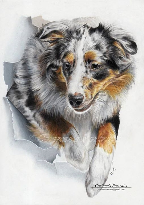 15-Australian-Shepherd-Corinne-Vuillemin-WIP-Color-Drawings-of-Actors-and-Animals-www-designstack-co