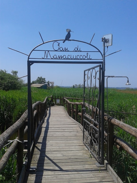 Massaciuccoli Oasis