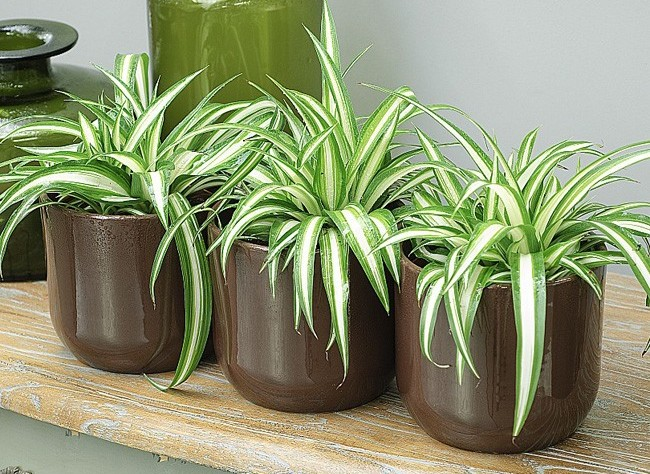 jardinage23 plante d 39 int rieur juin 2013. Black Bedroom Furniture Sets. Home Design Ideas