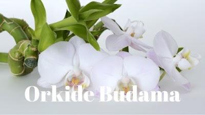 Orkide Nasıl Budanır?