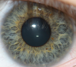 Fingerprint vs iris scanners