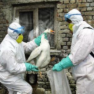 https://2.bp.blogspot.com/-RkH46vhLFyQ/TYGK-Zf5MzI/AAAAAAAAAFg/ZywZn1jF1WQ/s320/gripe-aviar.jpg