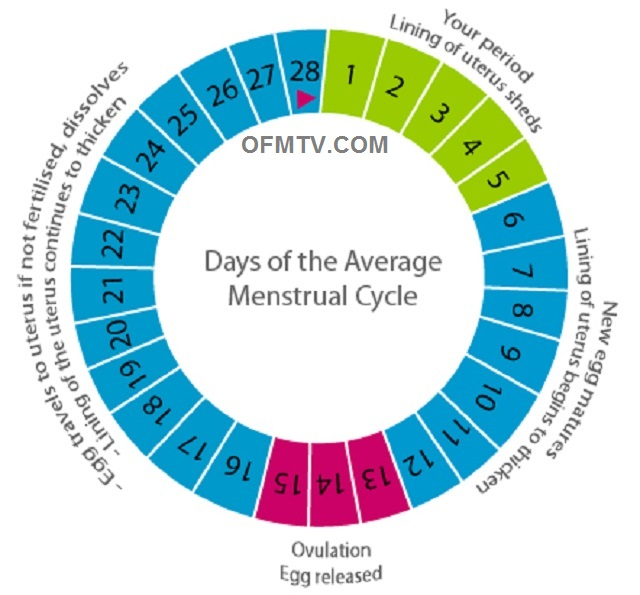 Menstrual period or cycle is the series of changes in a woman's body
