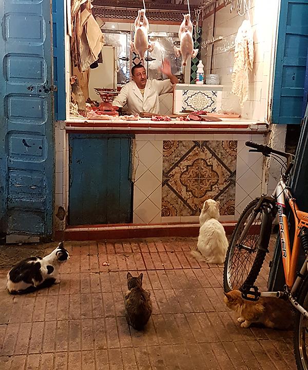 hopeful cats