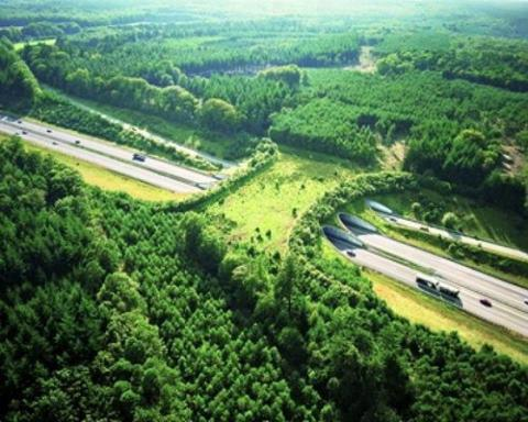 A wildlife bridge to help animals cross the highway.