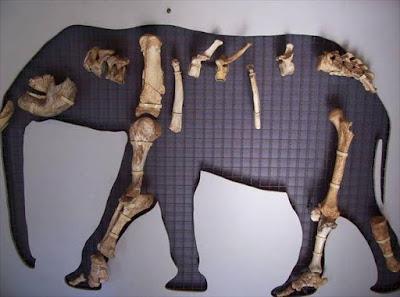 Ο ελέφαντας της Τήλου σε τρεις διαστάσεις