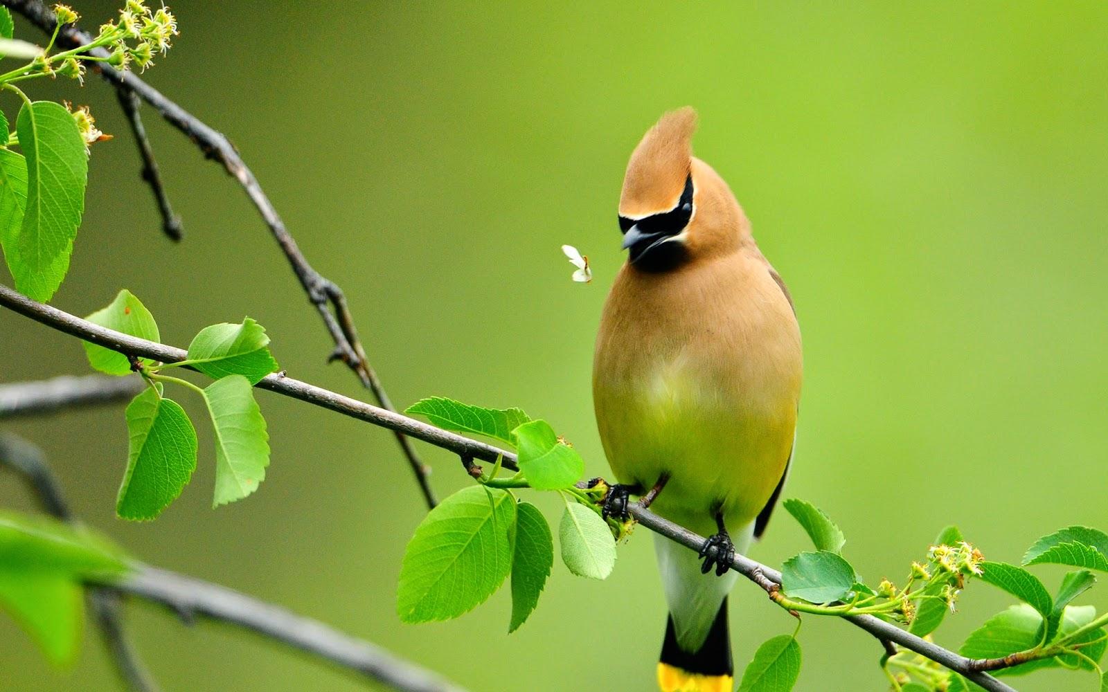Top 3 wallpapers - Hd birds images download ...