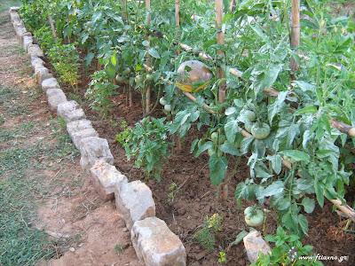 Κατασκευή Λαχανόκηπου-Παναγιώτης Μανίκης