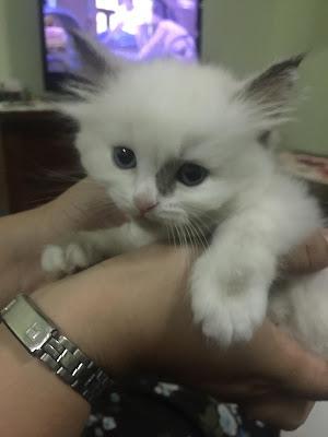 tiba-tiba rasa macam nak, kucing cantik