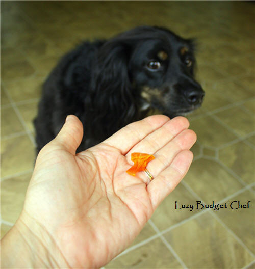 how to make dried butternut squash dog treats