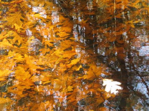 reflection in Muckwa Creek