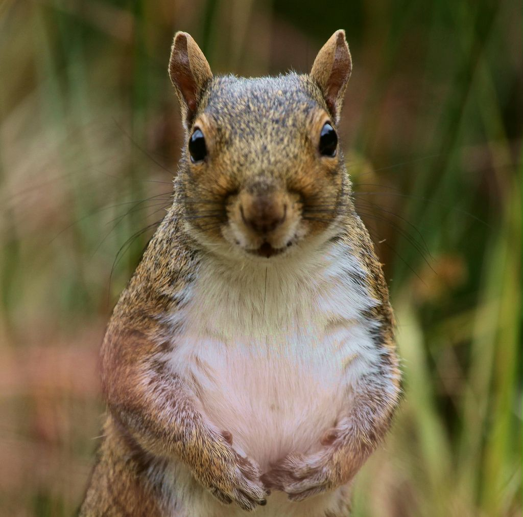 12. Guilty Lookin' Squirrel by Gary