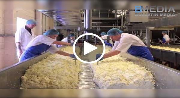 Wajib Tengok!! Proses Pembuatan Cheese Yang Pasti Buat Anda....