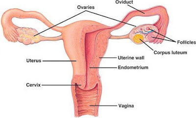 stage 4 ovarian cancer