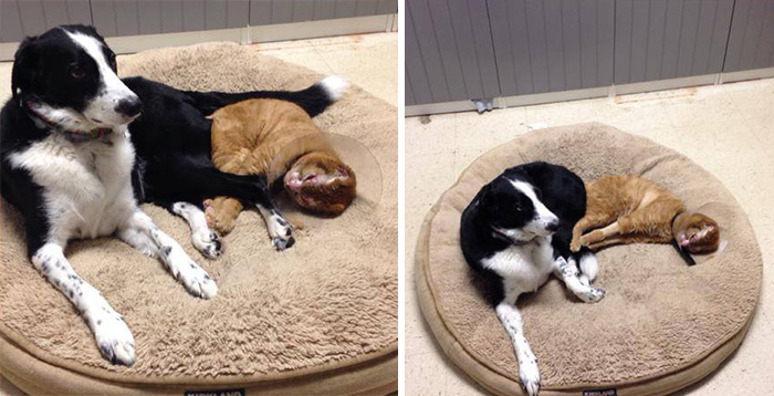 Rescued Cat Now Becomes A Rescue Cat