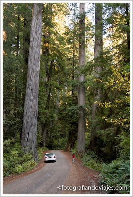 Prairie creek redwoods S.P.