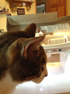 Cat in front of sewing machine